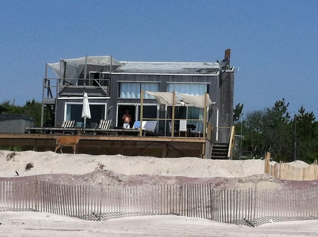 Ocean Front House, Fire Island Pines - Sayville - House