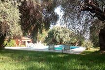 """Villa con piscina """" Il Grande Ulivo """""""