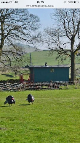 Rural Shepherds Hut Peak District - Buxton  - Hus