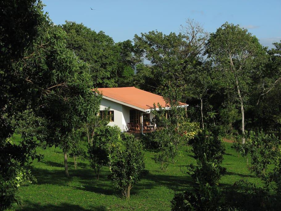 Zicht op één van de huisjes vanaf de boomgaard met citrusvruchten