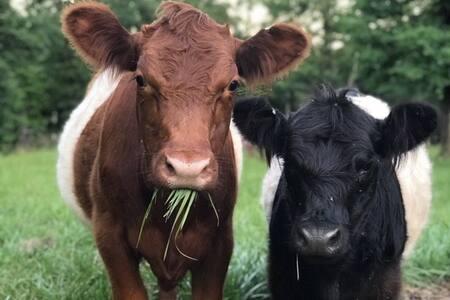 Double Merle Farm