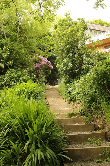 Steps up to Summerhaven through the woodland garden