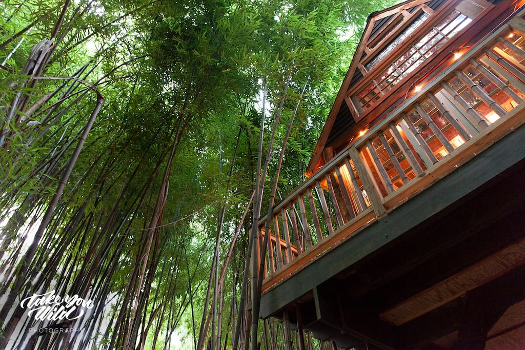 "Lindsay Appel's gorgeous photo of our treehouse soaring above the bamboo forest.  We are 15 in the air. Everyone always says that the photos ""don't do it justice."""