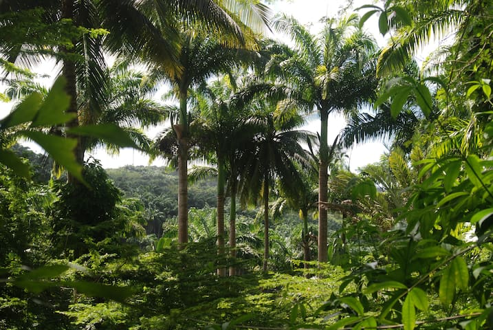Tropical Forest Camping @campingbarbados $13.00