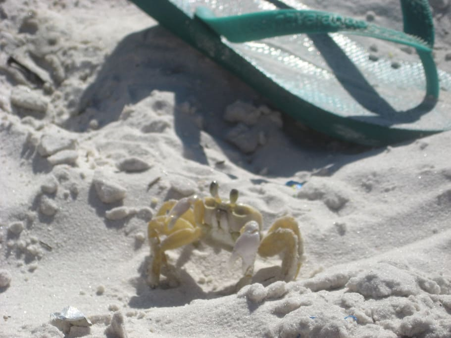 Our friendly beach crab!