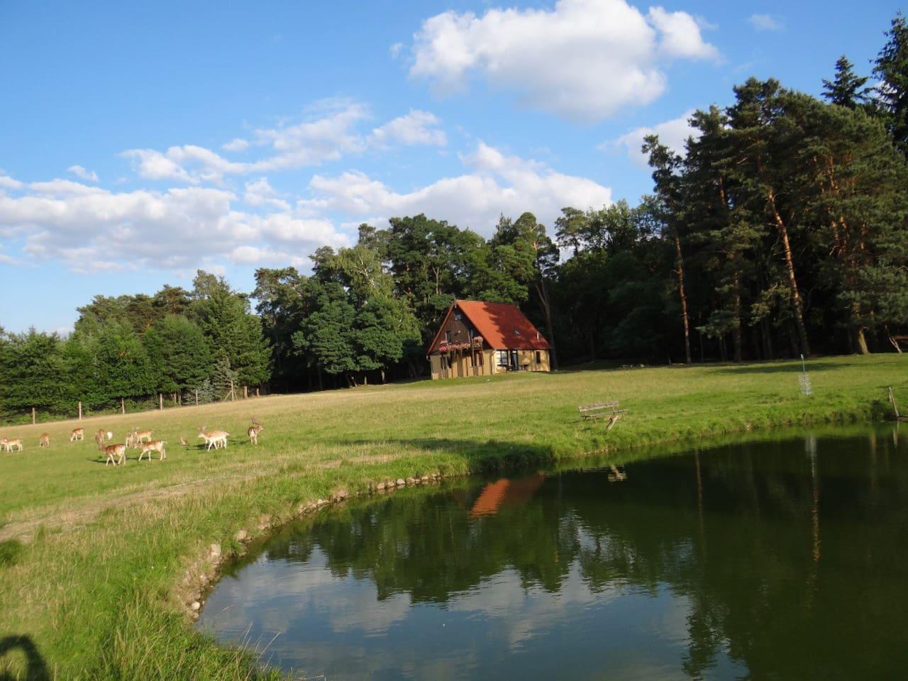 Ferienhaus mit Teich und Wild