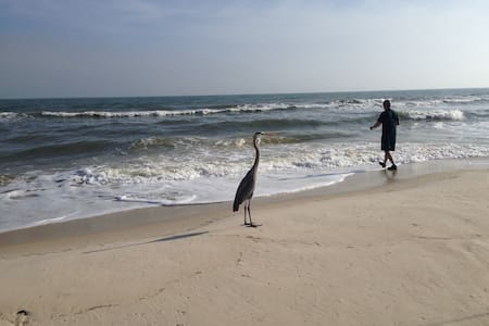 On Beach Path-Three-Four Min Walk, DEAL for April! - St George Isl - Hus