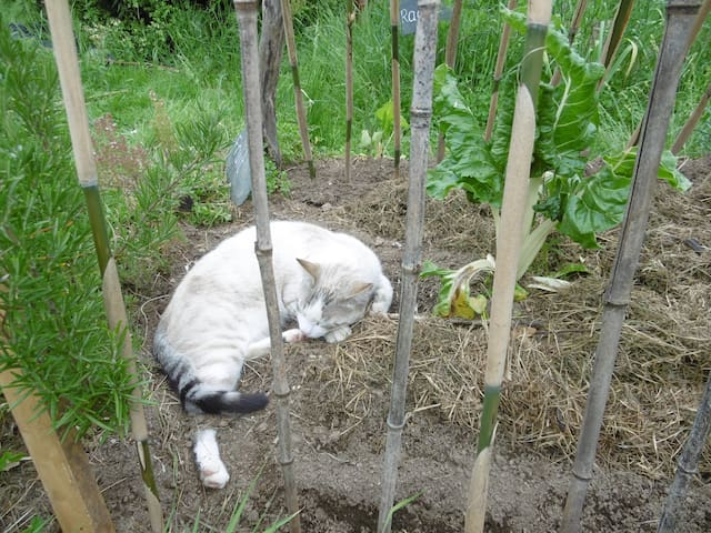 Snowy cat napping in the vegetable garden
