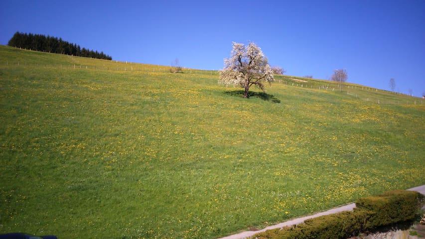 Sonnenbalkon im Bregenzerwald - Langenegg - Huoneisto