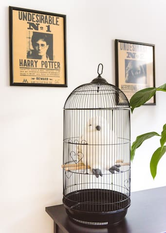 Your childrens will love this! Harry's Hedwig