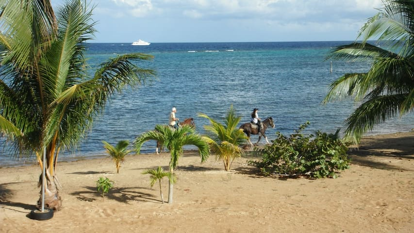 Front yard with dive boat and AKR horses