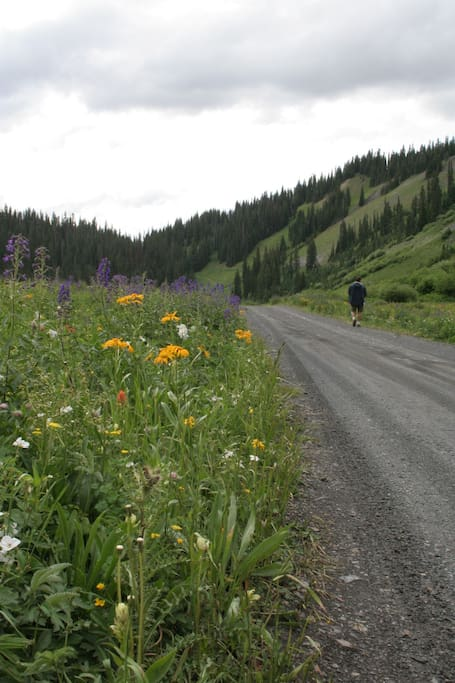 Hike the quiet roads and savor the wilderness and the wildflowers!