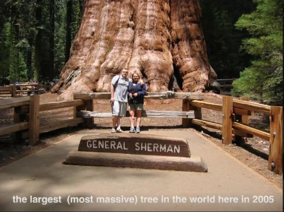The General Sherman tree is the largest in the world!