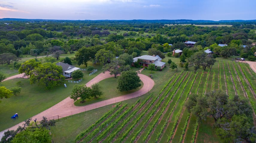 The Big Lodge (center right) overlooking our vineyard at Barons CreekSide
