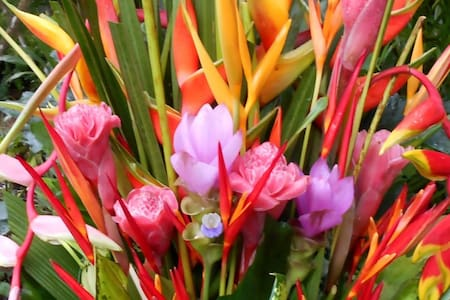 'Heliconia Rest