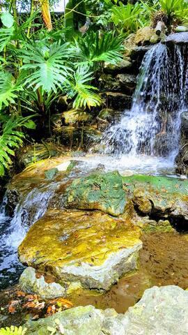 Selby Garden Rainforest