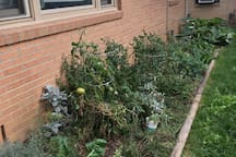 Help Your self to the garden! Enjoy fresh tomatoes, herbs, greens, and even rhubarb!