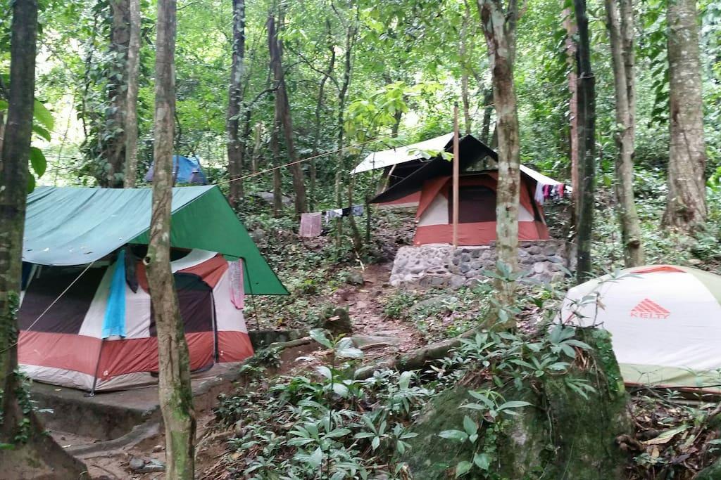 Tiendas de campaña con dos camas unipersonales rodeado de Bosque virgen.