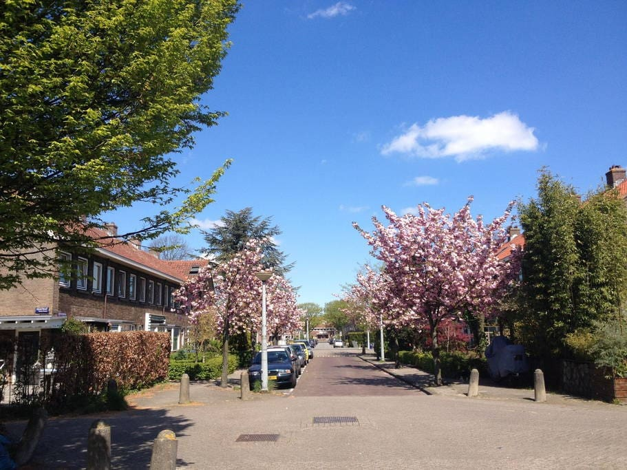 our street in springtime