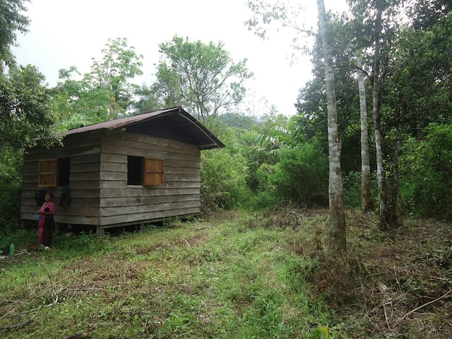 Hut in the forest solok selatan