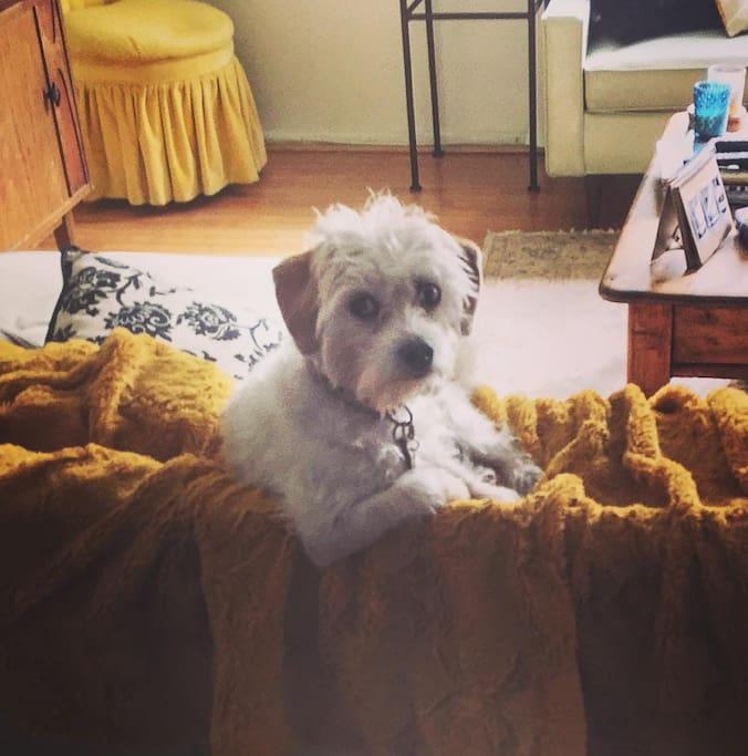House Mascot Sammi the Dog