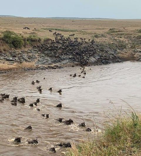 Mara Wildebeast destinations