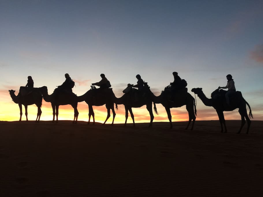 Our team gives you the occasion to enjoying camel treks