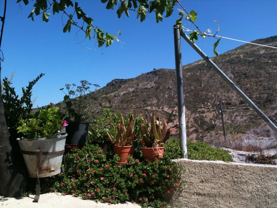 Vista desde el patio