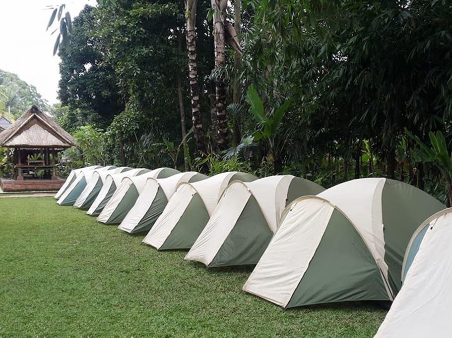 Bali Camping - Tent 11