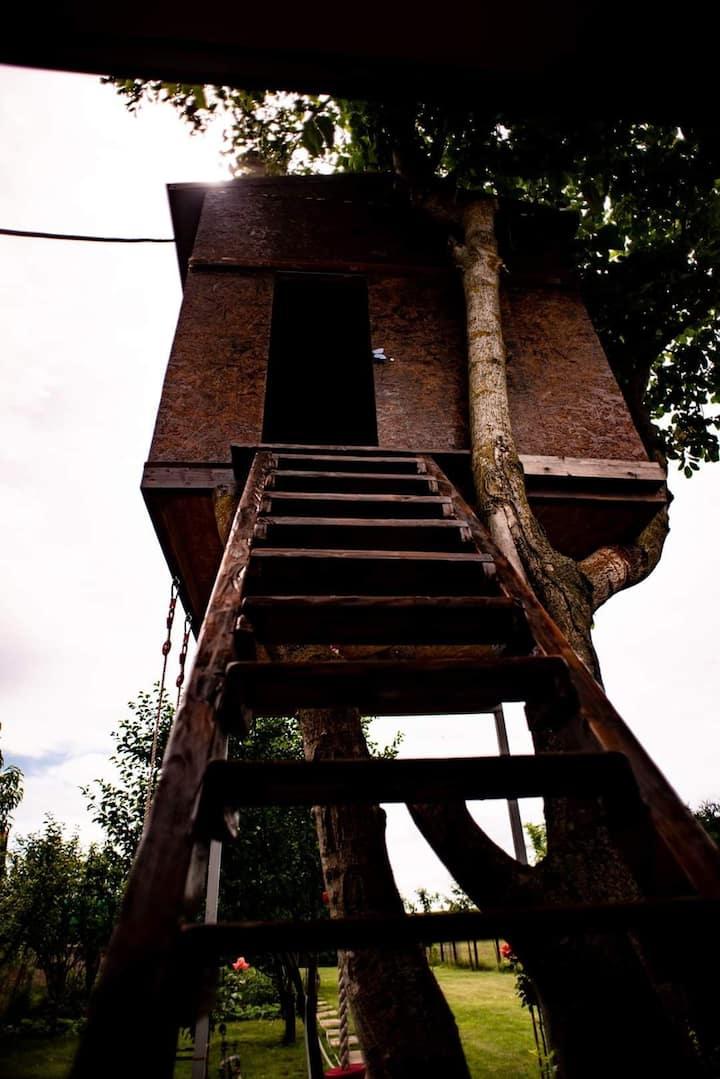 La Căsuța din Copac