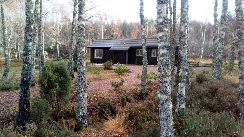 Little Birch Cabin