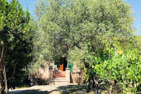 Lovely NEST among the olive trees in Florence