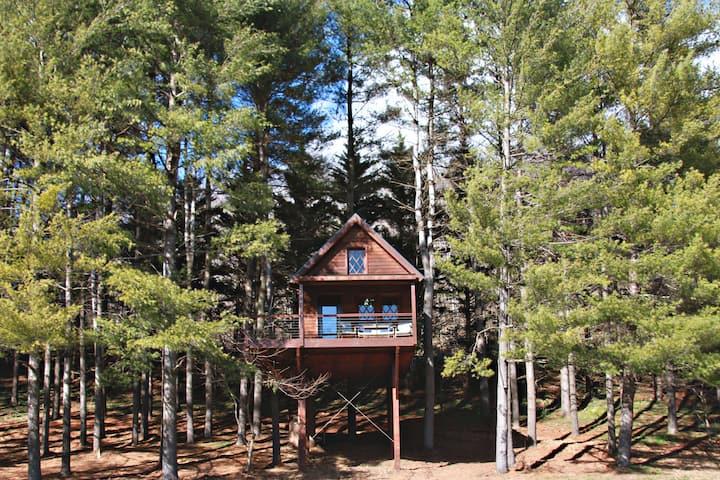 The Joshua Tree House