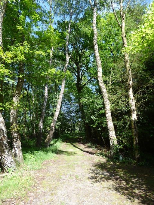Waldweg zum Feld