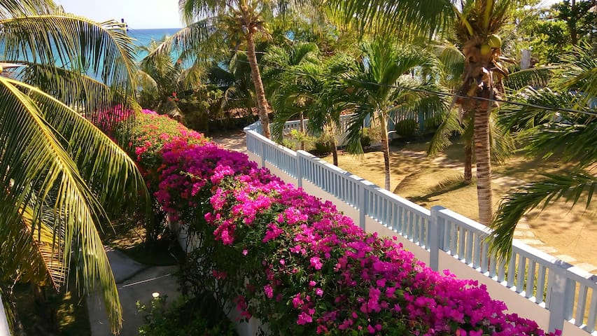Bougainvillas on top of the wall.