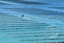 Moules Bouchots Huitres Point du Bay