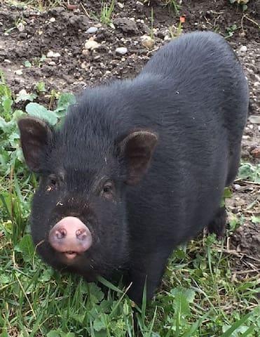 Also the animals in the neighborhood are looking forward to your visit / auch die Tiere in der Nachbarschaft freuen sich auf Ihren Besuch