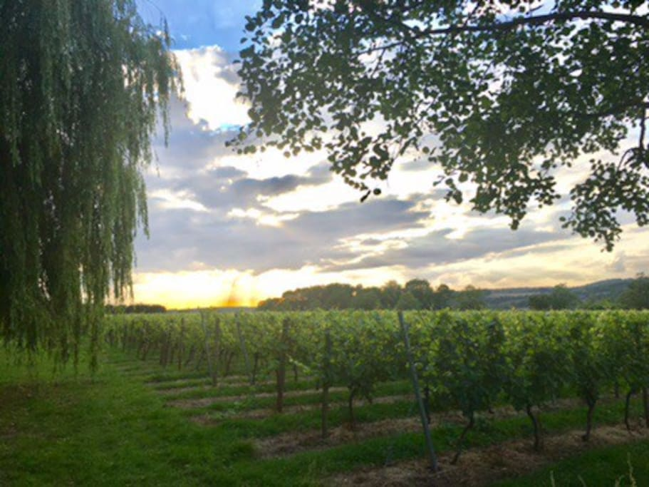 Beautiful sunset over the vineyard - view from garden