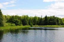 """This Pond is a 5 minute walk from the studio. Not ideal for swimming, but perfect for ice skating in Winter, fishing,  picnicking, canoeing or kayaking or catching toads!!! There is a """"common"""" canoe that may be available for use at the pond.  We also have a kayak that you are welcome to if available.  Sometimes we take it camping."""