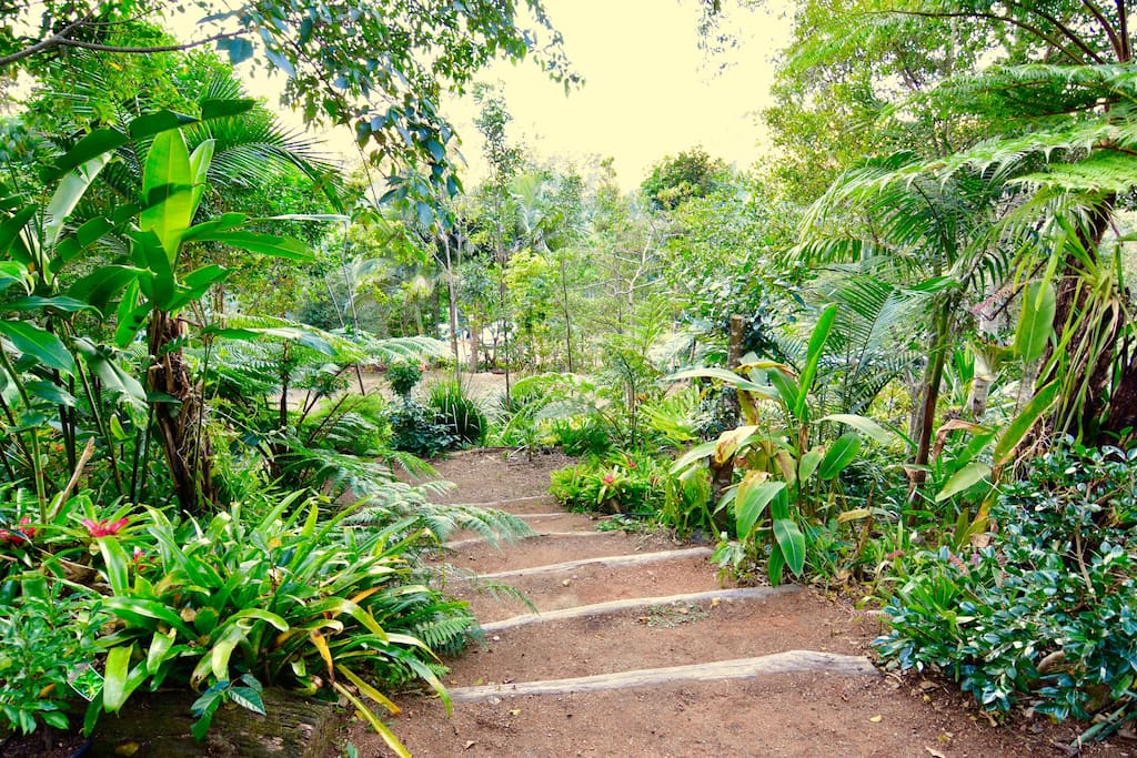 situated in rainforest gardens