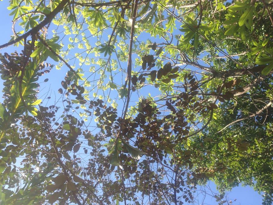 vista hacia arriba del jardín