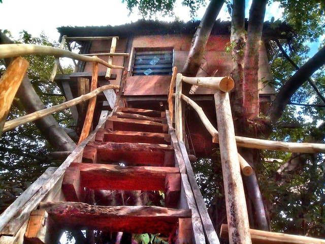 Volcano Eco Tree House