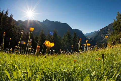 Azalea - Traum in den Bergen