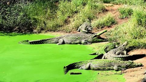 Crocodile farm cottage