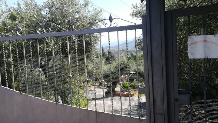 La casa tra il verde degli ulivi a Fonte Nuova 1