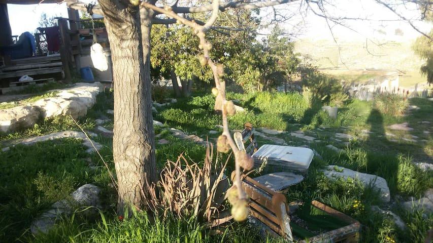Inbalim camping site - מעלה מכמש