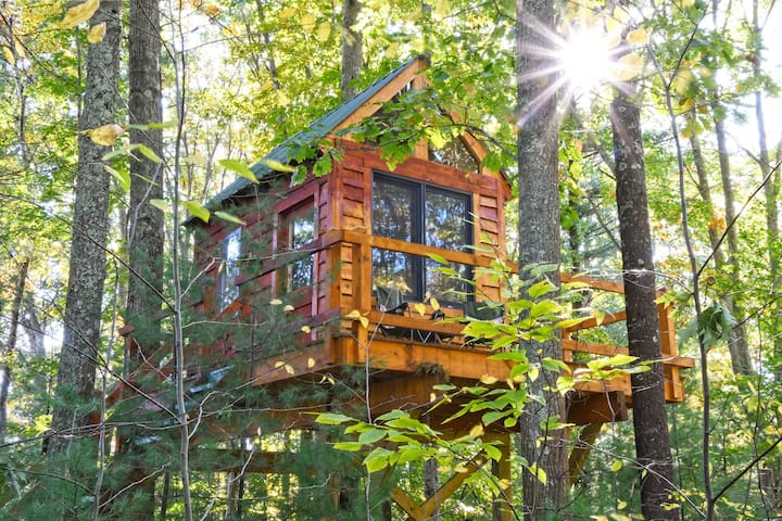 Tiny Tree Cabin camping