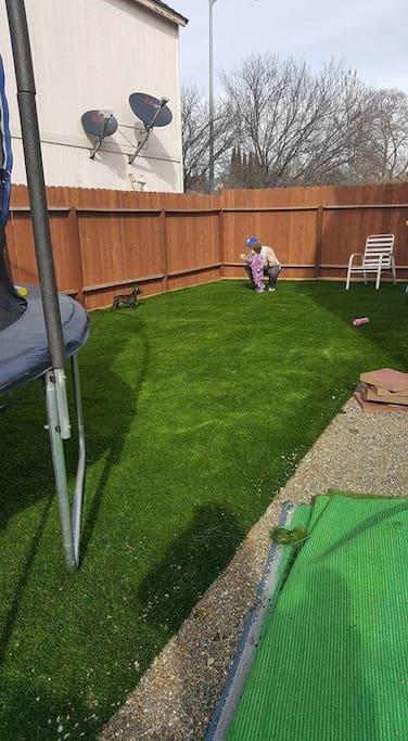 Our always green yard!
