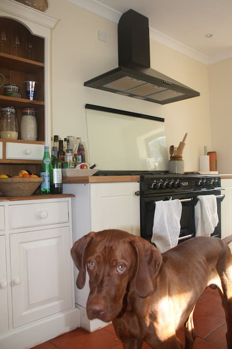 Well equipped kitchen and one resident dog
