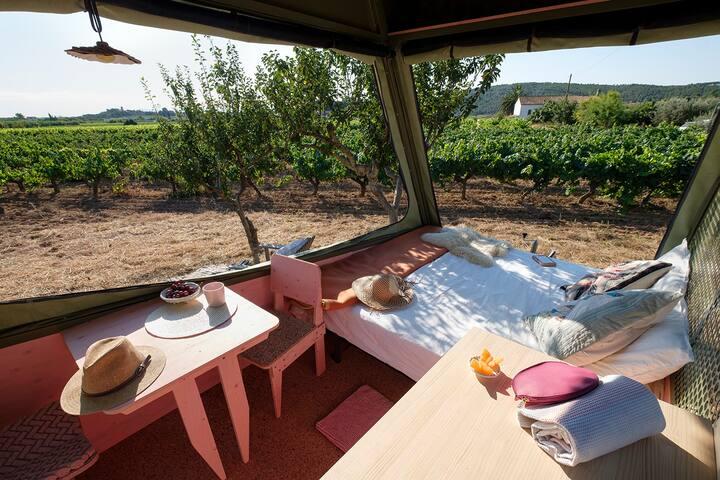 Float in the vineyards in PINEA eco-caravan